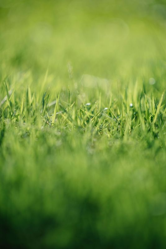 How Green is your grass? Tips for a greener lawn